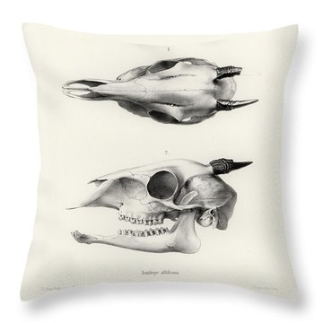 Throw Pillow featuring the drawing Skull Of A Bush Duiker, Sylvicapra Grimmia by J D L Franz Wagner