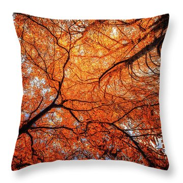 Sky Roots In Forest Red Throw Pillow