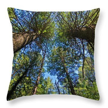 Throw Pillow featuring the photograph Skyward by Gary Lengyel