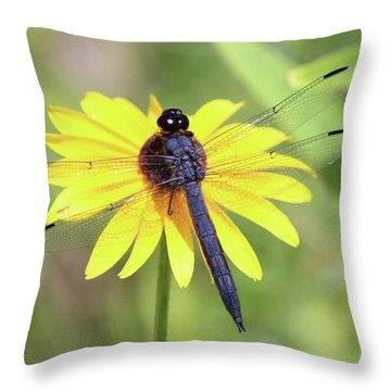 Slaty Skimmer  Throw Pillow