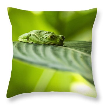 Sleeeepy Throw Pillow