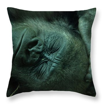 Throw Pillow featuring the photograph Sleep Tight by Richard Bryce and Family
