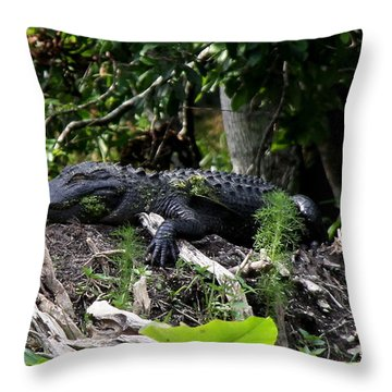 Sleeping Alligator Throw Pillow