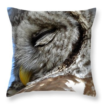 Sleeping Barred Owl Throw Pillow