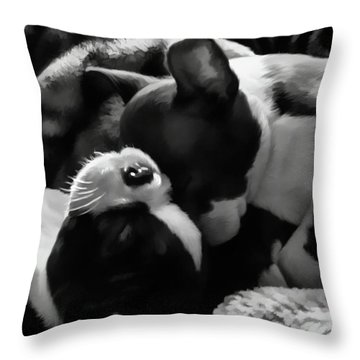 Sleeping Beauties - Boston Terriers Throw Pillow by Jordan Blackstone