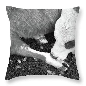 Sleeping Calf Bw Throw Pillow