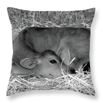 Sleeping Calf Throw Pillow