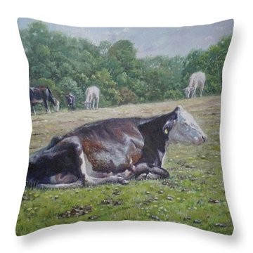 Sleeping Cow On Grass On Sunny Day Throw Pillow