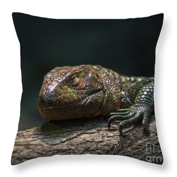 Sleeping Dragon Throw Pillow