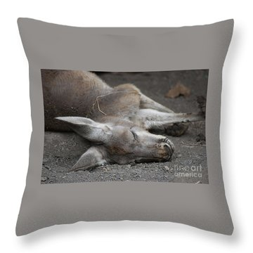 Sleeping Joey 20120714_65a Throw Pillow by Tina Hopkins