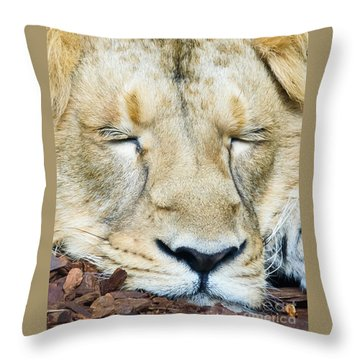 Throw Pillow featuring the photograph Sleeping Lion by Colin Rayner