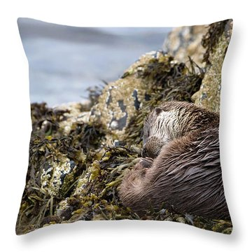 Sleeping Otter Throw Pillow