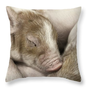 Sleeping Piglet Throw Pillow