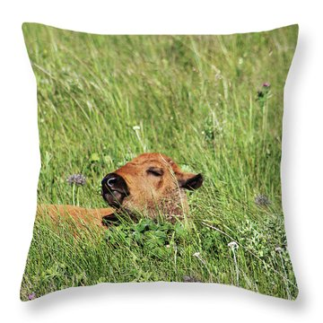 Throw Pillow featuring the photograph Sleepy Calf by Alyce Taylor