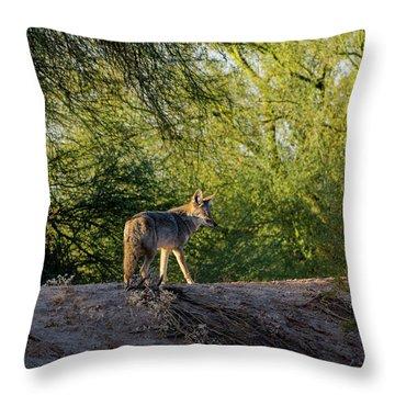 Sleepy Coyote Throw Pillow