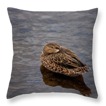 Throw Pillow featuring the photograph Sleepy Duck by Arthur Dodd
