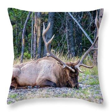 Throw Pillow featuring the photograph Sleepy Elk 2009 02 by Jim Dollar