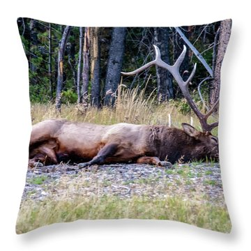 Sleepy Elk 2009 03 Throw Pillow