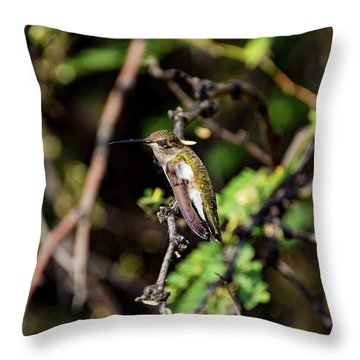 Sleepy Hummingbird Throw Pillow