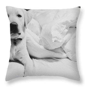 Sleepy Labrador Throw Pillow