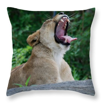 Throw Pillow featuring the photograph Sleepy Lion by Richard Bryce and Family