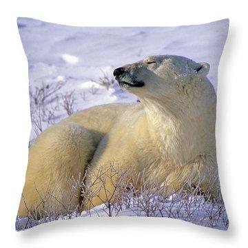 Sleepy Polar Bear Throw Pillow