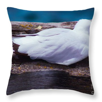 Sleepy Seagull Throw Pillow