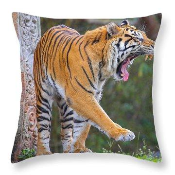 Sleepy Tiger Throw Pillow