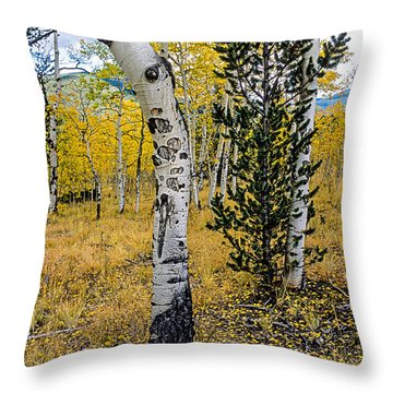 Slightly Crooked Aspen Tree In Fall Colors, Colorado Throw Pillow