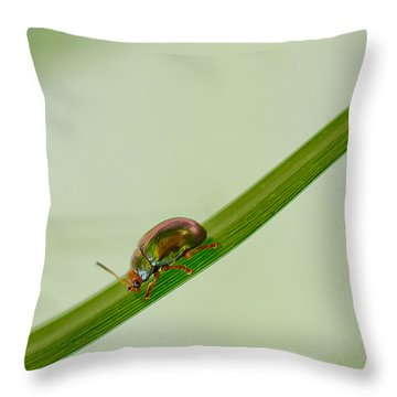 Slippery Dip Throw Pillow