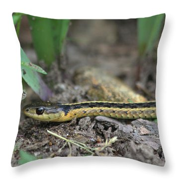 Slither Throw Pillow by Karol Livote