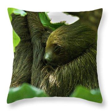 Sloth Sleeping Throw Pillow