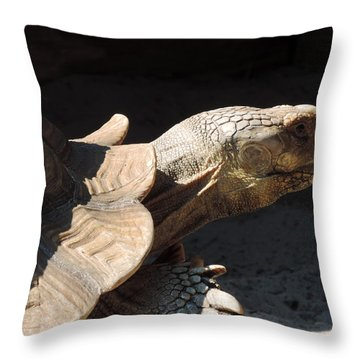 Slow But Sure Throw Pillow by Teresa Schomig