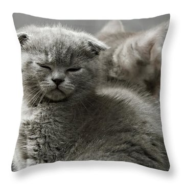 Slumbering Cat Throw Pillow