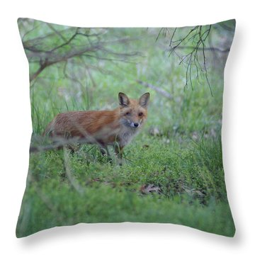 Sly Throw Pillow by Heidi Poulin