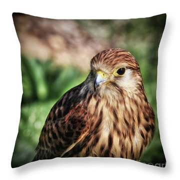 Small Bird Close-up Throw Pillow by Stephan Grixti
