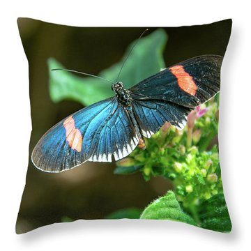 Small Black Postman Butterfly Throw Pillow