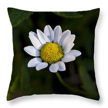 Small Daisy Throw Pillow by Svetlana Sewell