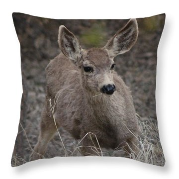 Small Fawn In Tombstone Throw Pillow by Colleen Cornelius