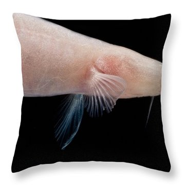 Small Headed Cave Loach Throw Pillow