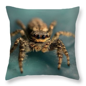 Small Jumping Spider Throw Pillow