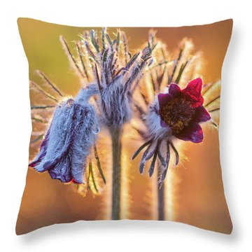 Small Pasque Flower, Pulsatilla Pratensis Nigricans Throw Pillow