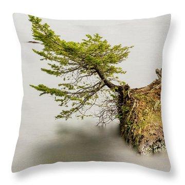 Small Tree On A Stump Throw Pillow