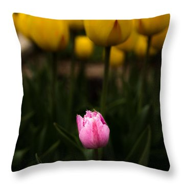 Small Tulip Throw Pillow by Jay Stockhaus