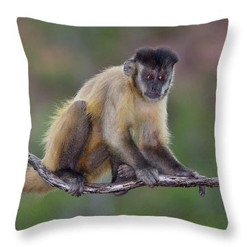 Throw Pillow featuring the photograph Smarty Pants by Tony Beck