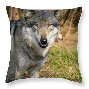 Smiling Wolf Throw Pillow