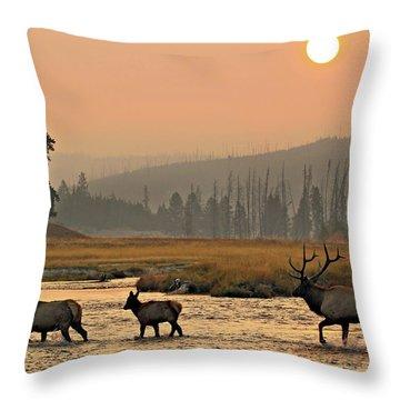Smokey Elk Crossing Throw Pillow