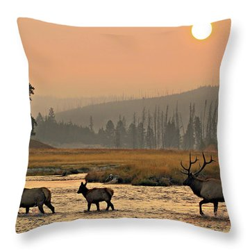Smokey Elk Crossing Throw Pillow