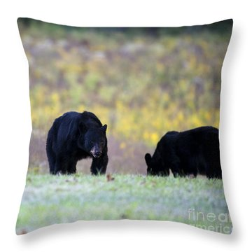 Smoky Mountain Black Bears Throw Pillow