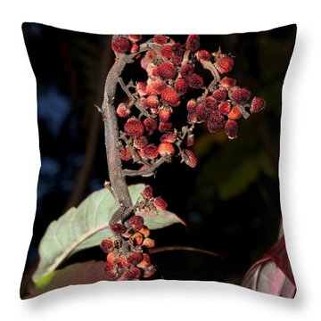 Smooth Sumac Flower Throw Pillow by Robert Morin